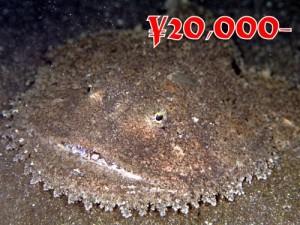 キアンコウ1997-500x375