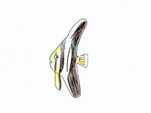 ミカヅキツバメウオ